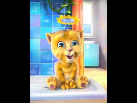 Mèo Nhái Mr.Taxi