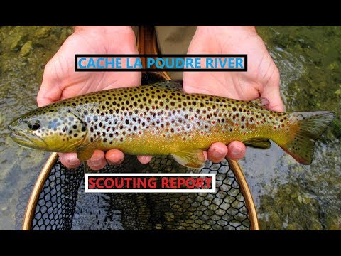 Fly Fishing Cache La Poudre River In The Spring