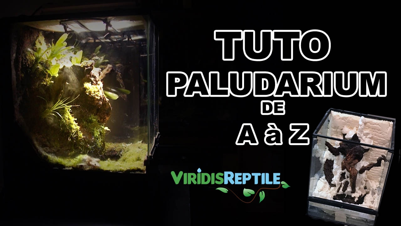 tuto creer un terrarium plant paludarium youtube. Black Bedroom Furniture Sets. Home Design Ideas