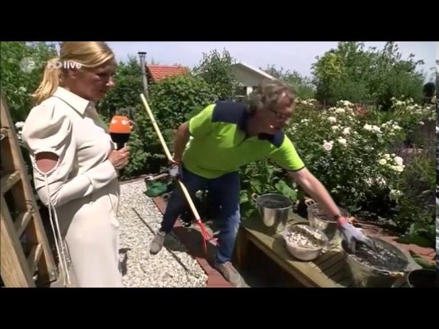 ZDF-Fernsehgarten: Boden für Rosen verbessern durch mulchen