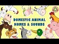 Domestic Animal Homes & Sounds | Educational Rhymes | Nursery Rhymes for Children