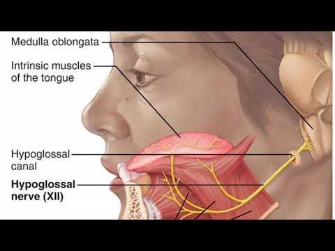 Glossopharyngeal Breathing.