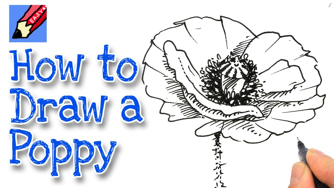 How To Draw A Poppy Real Easy Youtube