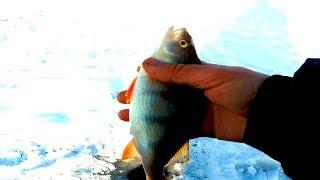 Безмотылка спасла рыбалку!!!
