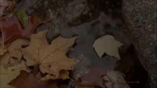 Samuli Edelmann - Kaikki tahtoo (lyrics)