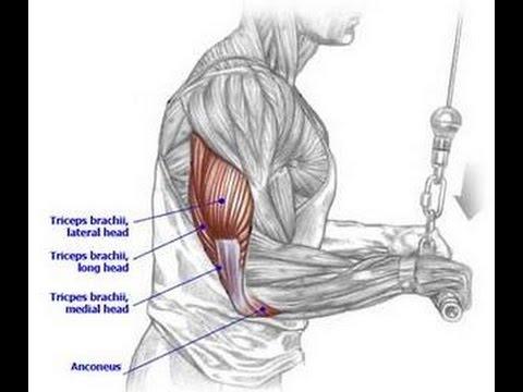 Triceps Tendon Tear | Phoenix Shoulder and Knee