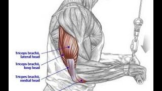 thought ronnies tricep injury was bad? - Bodybuilding.com Forums