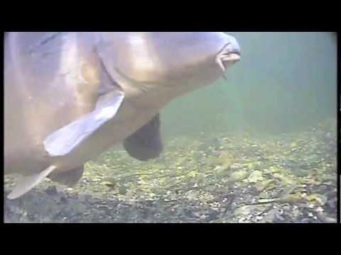 korda underwater 7 free