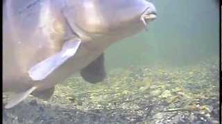 Korda State of the Art Underwater Carp Fishing - Part 5 - Trailer