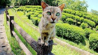 手摺りにちょこんと座る猫が「もっとモフって!」と地面に降りてきた