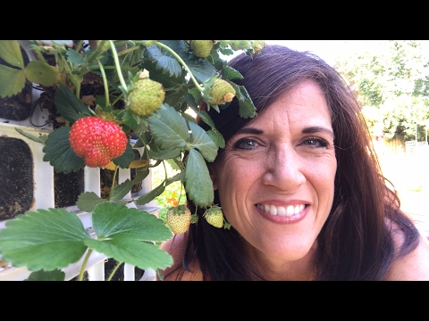 🍅LIVE:  Strawberry Crate Tower Tips - Grow More Strawberries (replay)