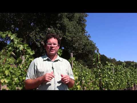 Napa Valley Winemakers: Chris Vandendriessche, White Rock Winery