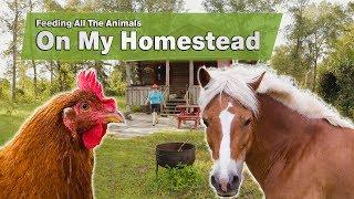 Feeding All The Animals On My Homestead