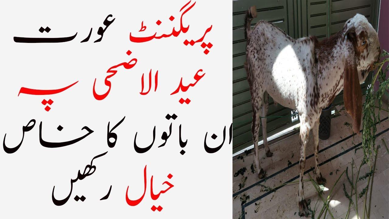Pregnancy Care Tips During Eid Ul Azha ll Pregnancy Care Tips In Urdu ll بڑی عید اور پریگننٹ عورت