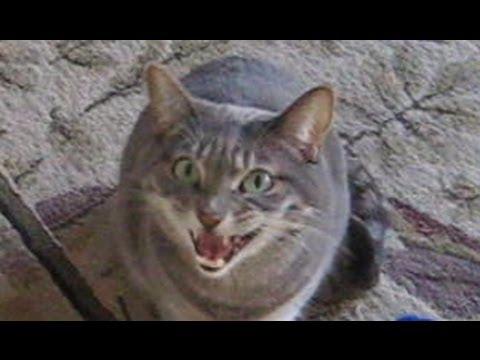 cat entertainment services