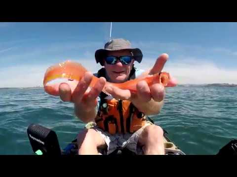 Kayak Fishing For Red Band Fish At Plymouth UK.