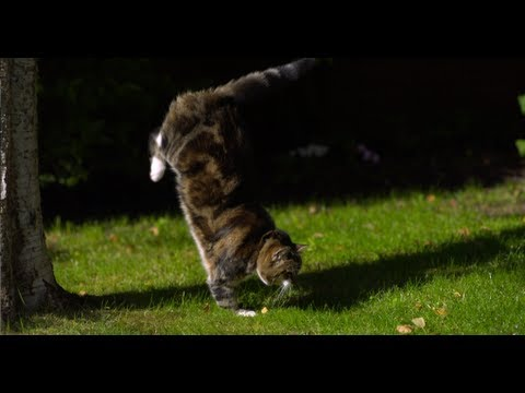 Thumbnail for Cat Video Cat Jumping in Slow Motion