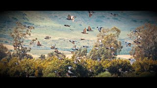 "Kirlian Camera ""TWIN PILLS"" (The Video, 2021)"