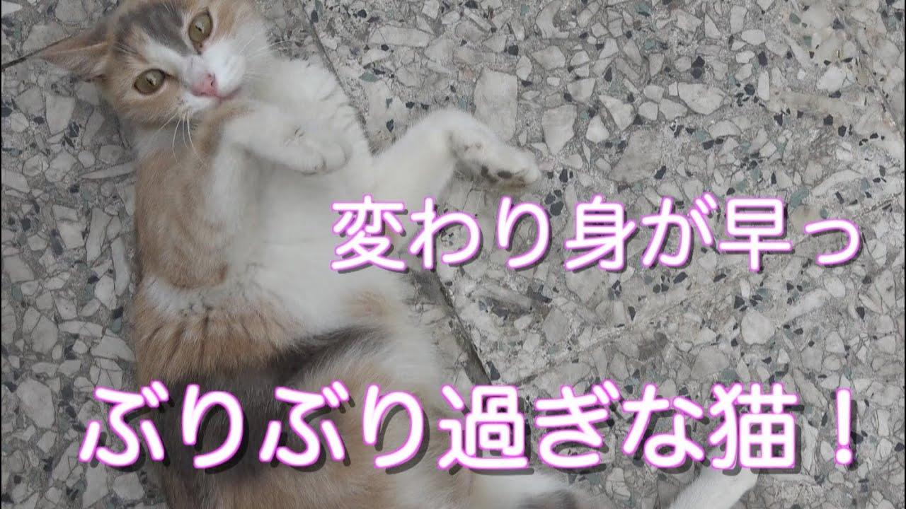 人間の女性のような猫に笑笑!こういう女っているよね?w