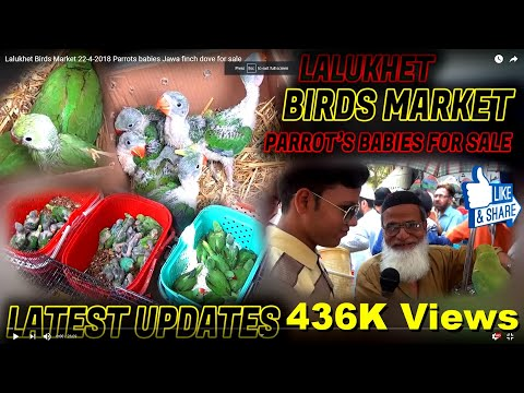 Lalukhet Birds Market 22-4-2018 Parrots babies Jawa finch dove  for sale
