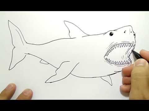 Cara Menggambar Ikan Hiu How To Draw Shark Youtube
