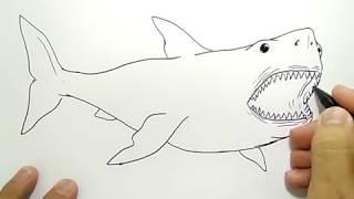 cara menggambar ikan hiu / how to draw shark