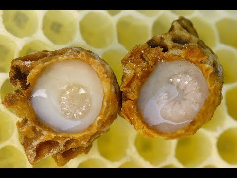 royal-jelly-extract-|-cancer,-immune-system,-skin-aging,-menopause,-brain,-mcfas,-lipids,-fat