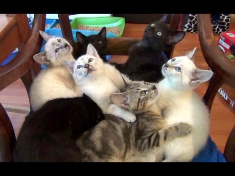 7 Adorable Purring Foster Kittens