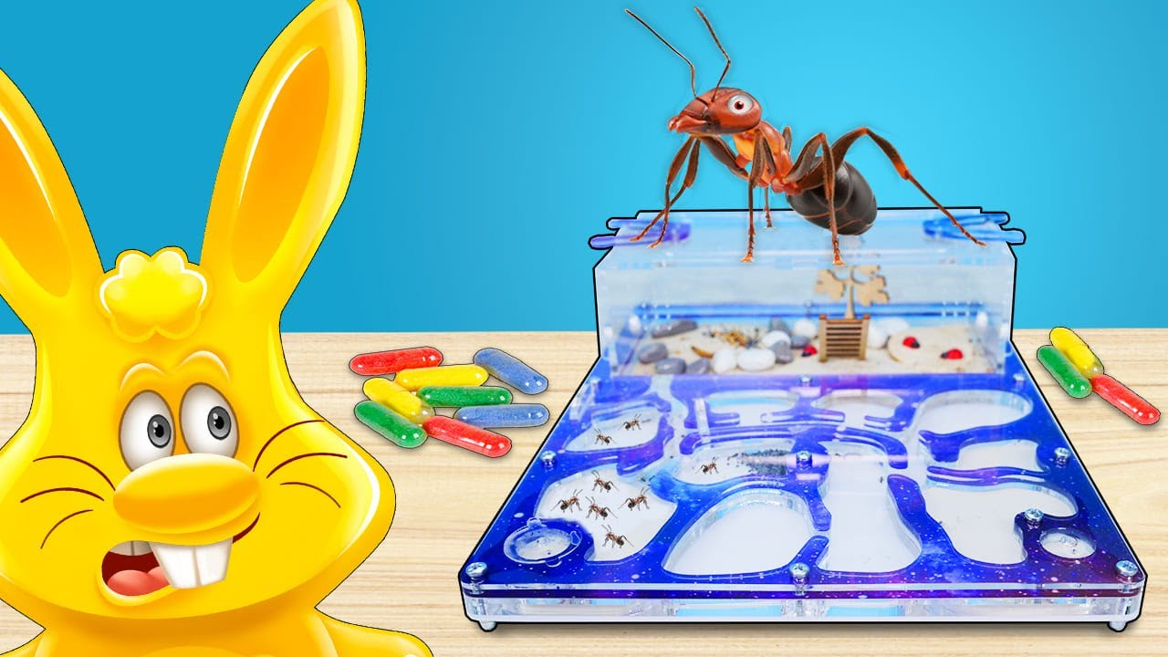 Что произошло с муравьями желейного зайца Харитона и капсулы с животными
