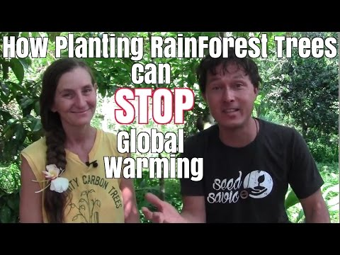 How Planting Rainforest Trees Can Stop Global Warming