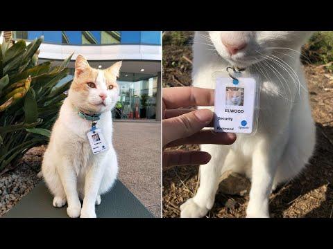 Кот посещает больницу в течении года и тогда его берут на работу в качестве охранника...