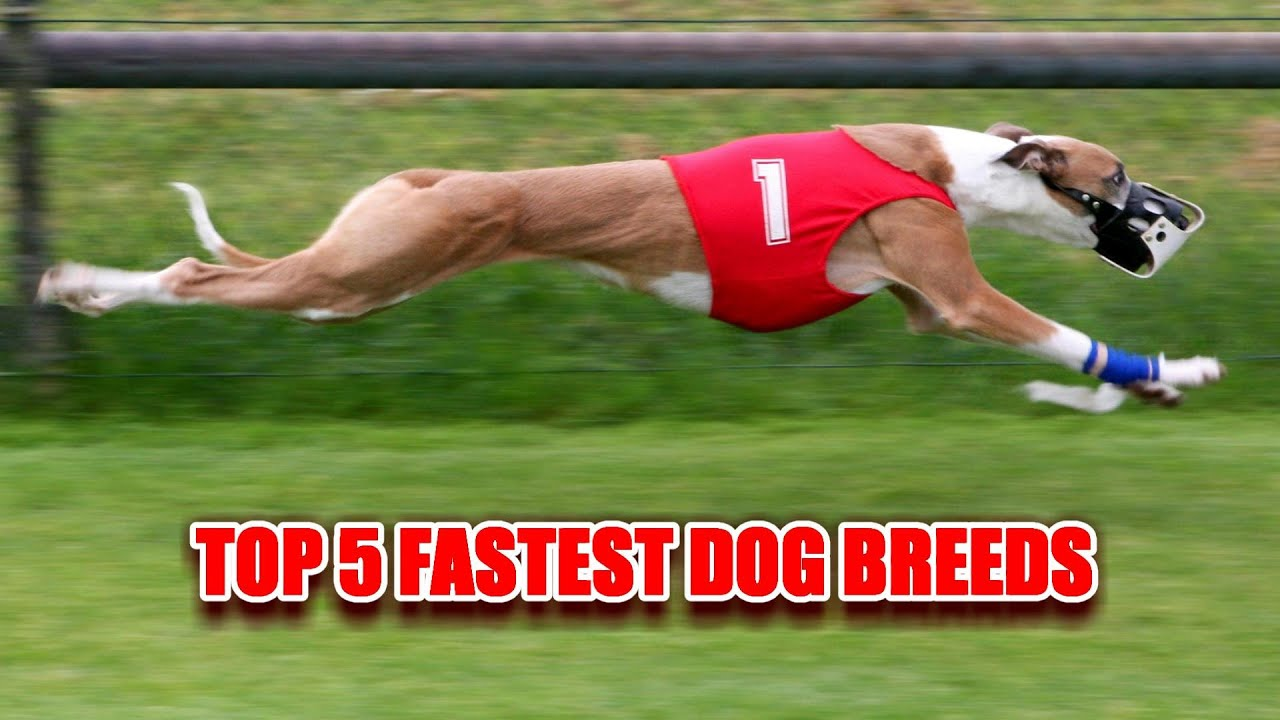 Breed Fast Dont Get Caught