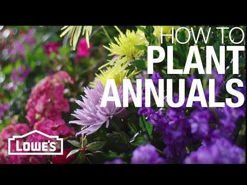 How to Plant Annual Flowers