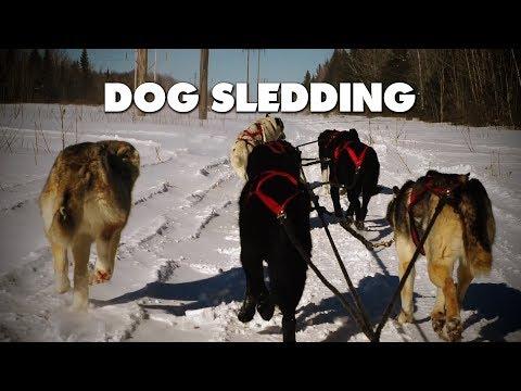 Winter dog sledding in Allardville, New Brunswick!