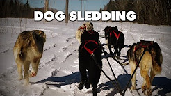 Winter dog sledding in Allardville, New Brunswick!
