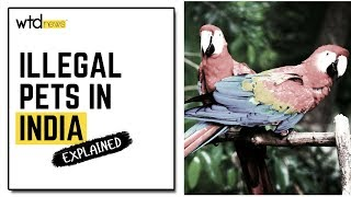The Exotic Animals Market In India: Explained