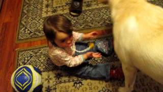 Собака отучает ребенка от соски