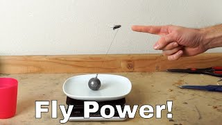 how much weight can a fly actually lift? experiment—i lassoed a fly