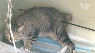 Arrow Pierces Cat's Body | Animal in Crisis EP11