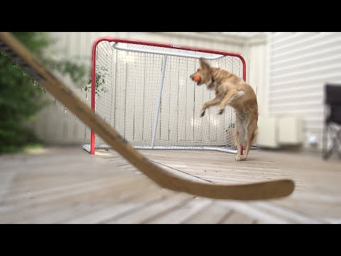 Playing Hockey with the hockey dog - Carmen The Golden Episode