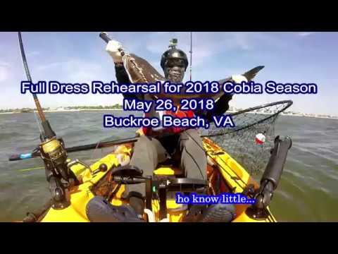 Cobia, May 26, 2018 (Buckroe Beach, VA)