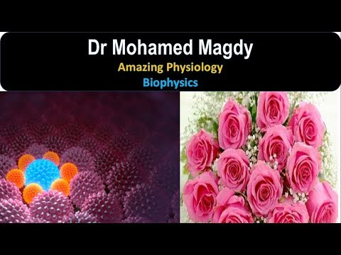 Physiology of Biophysics 2 | Cell Transport | Diffusion | Dr Mohamed Magdy