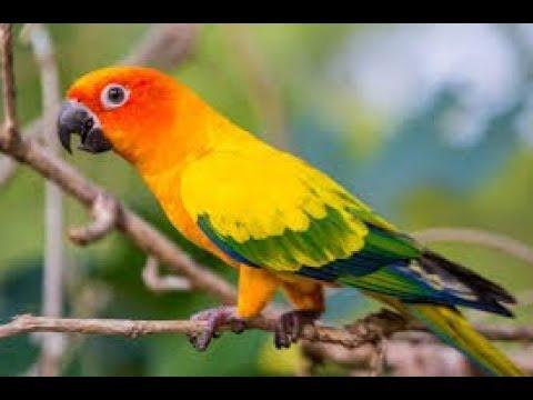 Bird - Ringtone