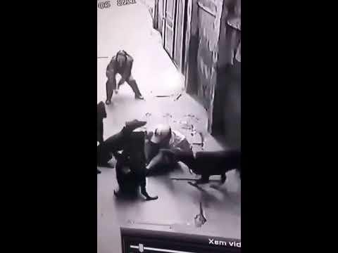 Cães Rottweiler Atacam O Próprio Dono - Impressionante!