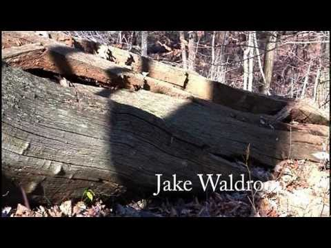 AMERICAN CHESTNUT BLIGHT -  Greatest forest loss in history