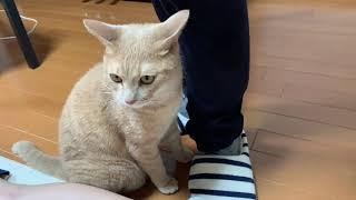 意外とスゴ技をもっている猫