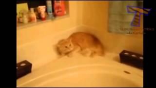 Коты которые не любят купаться