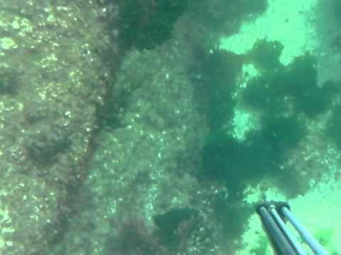 Camuflaje de centollas y necoras en el fondo del mar