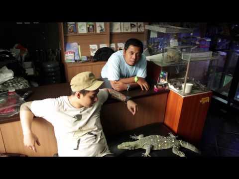 UrbanPet episode - varanus salvadori