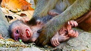 Million Sad, But Million Lucky, New Born Baby Monkey Just Fell Down  From Tree This Morning Survived